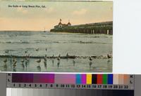 """""""Sea Gulls at Long Beach Pier, Cal.""""ca. 1906"""