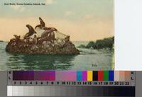 """Seal Rock, Santa Catalina Island, Cal."""