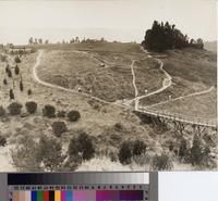 """Looking across the barranca of the twelfth fairway""of the Palos Verdes Golf..."