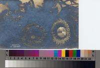 """Sea Anemonies"" from Santa Catalina Island, California"