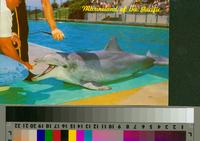"""""""Flipper, The Talking Dolphin, Marineland of the Pacific"""""""
