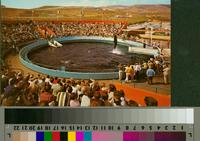 """""""'Whale Show Time, Marineland of the Pacific"""""""