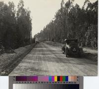 Automobiles along unpaved road, Palos Verdes Estates.